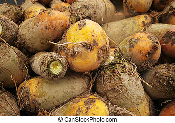 Backgrounds: Sugar Beets