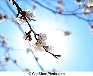 White Spring Flowers in Bright Sun Light on Deep Blue Sky Background