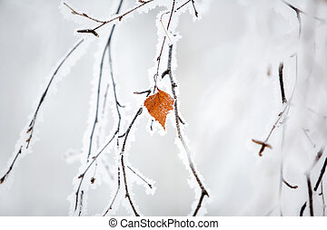 Winter - Frozen branch with orange leaf and frost