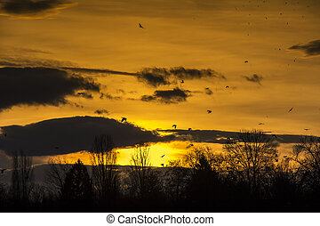 Birds Flying in Sunset - Flock of Birds Flying in the sky...