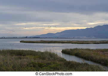 Ebro delta landscape