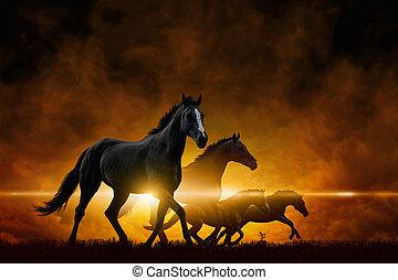 Four running black horses
