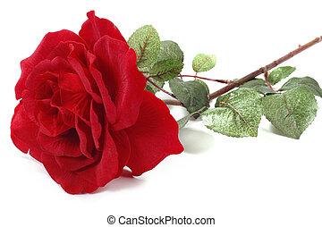 Single Red Rose - Single red Rose on white clear background