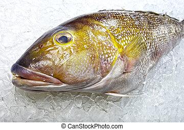 właściciel sklepu rybnego, Od, Rozmaity, produkty morza,