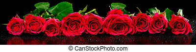 Panoramic image of red roses with dew drops on a black...