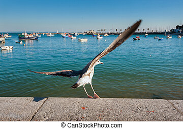 Sea Gull on the rise in the fishing port