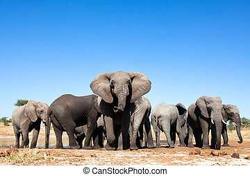Elephants at waterhole