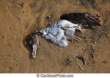 Dead sea bird seagull half buried in beach sand in Canary...