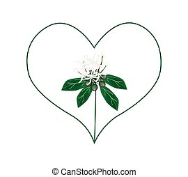 White Ixora Flowers in A Heart Shape - Love Concept,...