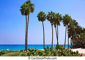 Costa Calma beach of Jandia Fuerteventura palm trees Canary...