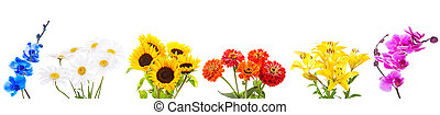 various bouquet of flowers isolated on white background