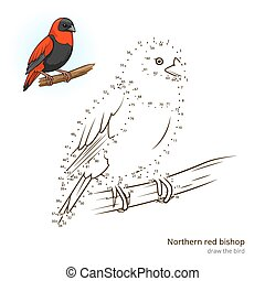 Northern red bishop bird learn to draw vector - Northern red...