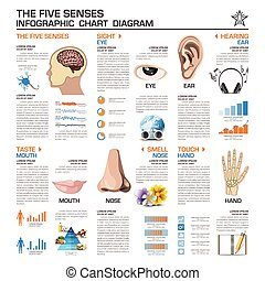 The Five Senses Infographic Chart Diagram Vector Design...