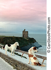 winter beach and castle view with two dogs - two dogs on the...
