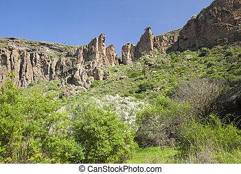 Gran Canaria, Caldera de Bandama, retama - Gran Canaria,...