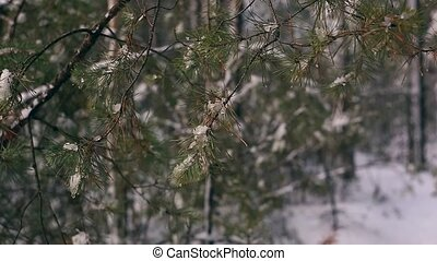 snow-covered branch against the background of a winter forest