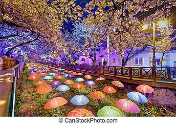 cidade, Coréia, Flores, cereja,  busan, noturna, SUL