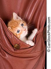 Kitten in a pocket - Six weeks old kitten in the pocket of a...