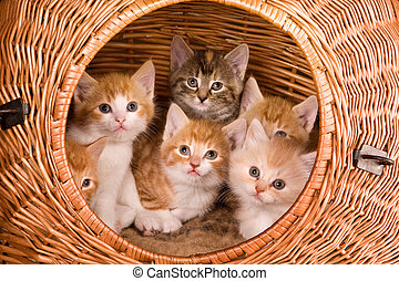 Six in a basket - Family of six kittens in their own basket
