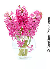bouquet of hyacinths - hyacinths in glass vase isolated on...