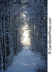 Corridor with light at the winter forest