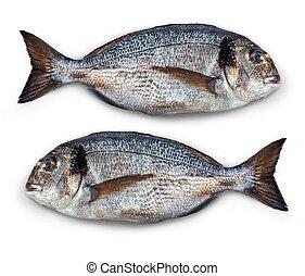 fish, elszigetelt,  dorado