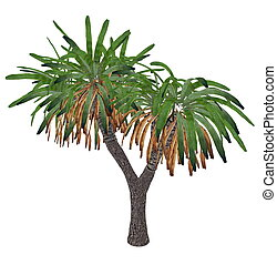 Canary Islands dragon tree or drago, dracaena draco - 3D...