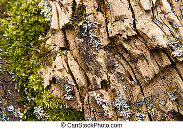 Rotten wood - Old rotten wood and bits of moss
