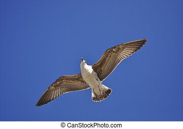 Sea bird seagull flying up on a background of blue sky
