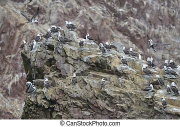 Ballestas islands, Paracas, Peru - Paracas National...