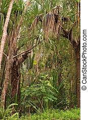 Coastal Scenery - coastal scenery near Yorkeys Knob, Cairns,...