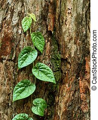 Jungle - young jungle plant against old tree bark