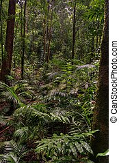 Daintree National Park - Mossman Gorge, Daintree National...