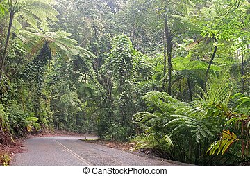 Daintree National Park - Road through the Daintree National...
