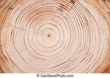 Tree rings background - Cut down tree circle rings texture...