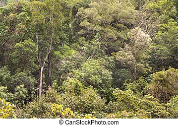 Rainforest - Bushwalking at the Crystal Cascades, Redlynch...
