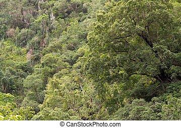 Rainforest - Bushwalking at the Crystal Cascades, Redlynch...