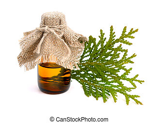 Thuja foliage with essential oil. Isolated.