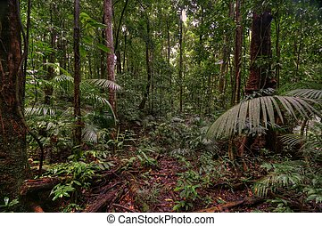 Mossman Gorge, Daintree National Park, Queensland, Australia