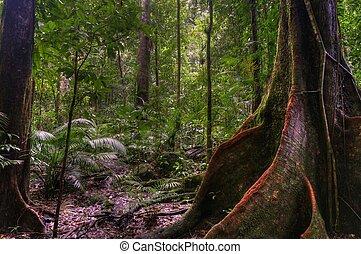 Mosssman Gorge - Mossman Gorge, Daintree National Park,...