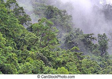 rainforest - steamy rainforest, Barron Gorge, near Cairns,...