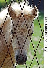 Young sad horse portrait