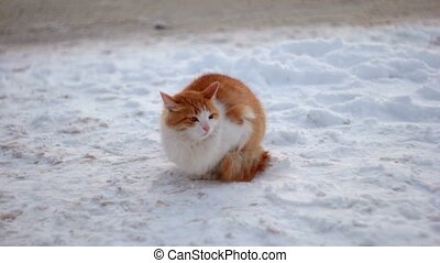 Beautiful ginger cat on snow background waiting for master
