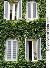 Old house covered by ivy in Rome near Campo dei Fiori
