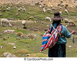 mujer, Un, Lama, Multitud, el, andes, de, perú,...