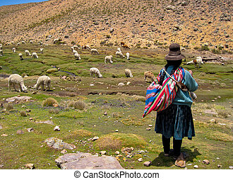 Woman with A Lama Flock in The Andes Of Peru (near By...
