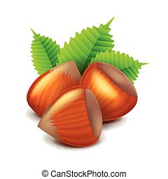 Hazelnuts isolated on white vector