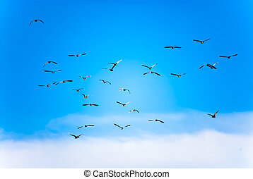 Flock of birds in the sky
