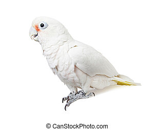 White Parrot Bird Profile - Isolated on White - Goffin's...