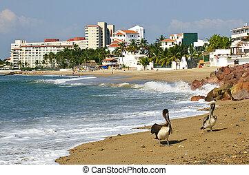 pelícanos, playa,  México
